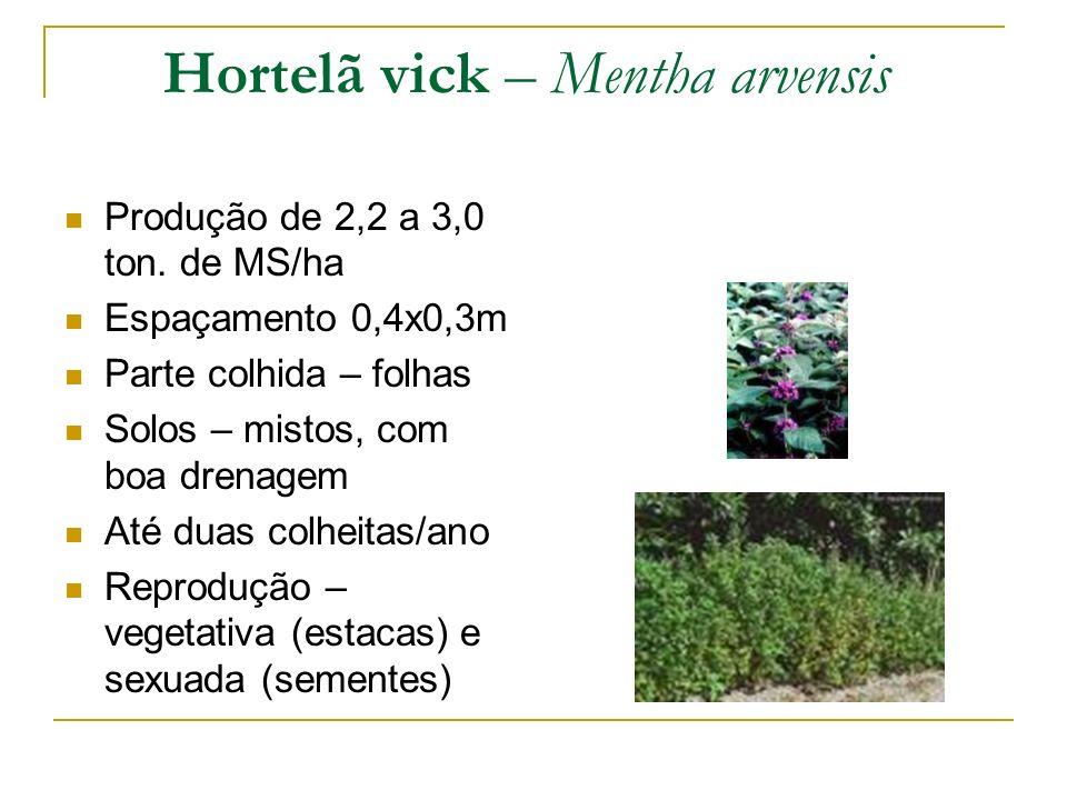 Produção de 2,2 a 3,0 ton. de MS/ha Espaçamento 0,4x0,3m Parte colhida – folhas Solos – mistos, com boa drenagem Até duas colheitas/ano Reprodução – v
