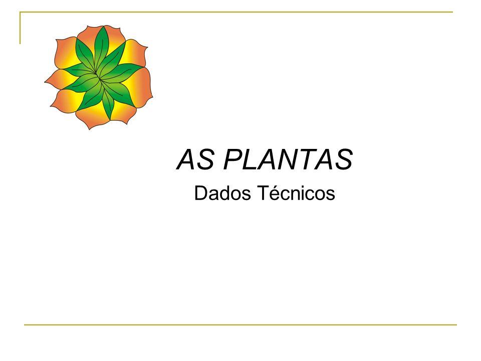 Arnica – Solidago microglosa Produção de 1,5 a 2.0 ton.