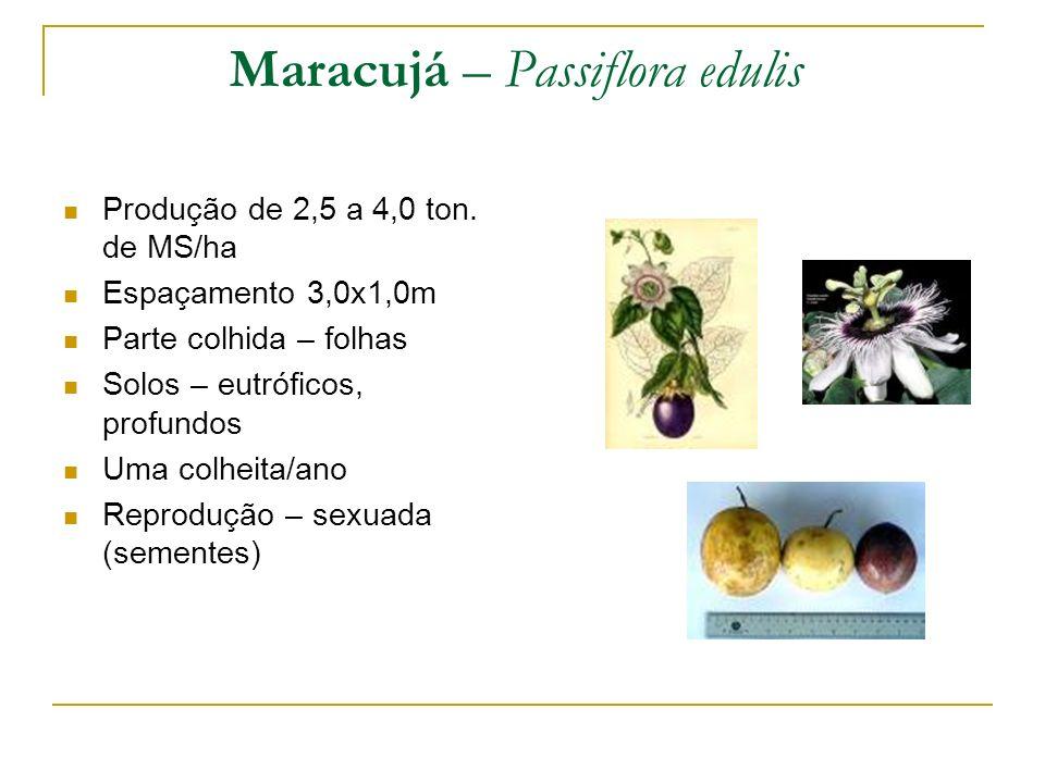 Produção de 2,5 a 4,0 ton. de MS/ha Espaçamento 3,0x1,0m Parte colhida – folhas Solos – eutróficos, profundos Uma colheita/ano Reprodução – sexuada (s