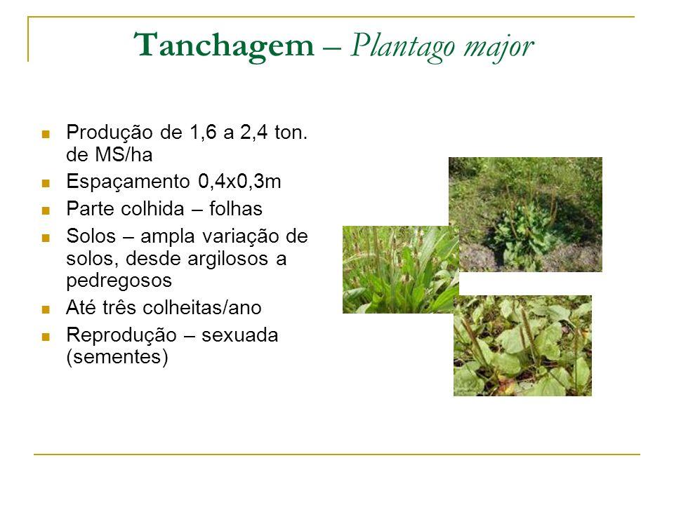 Produção de 1,6 a 2,4 ton. de MS/ha Espaçamento 0,4x0,3m Parte colhida – folhas Solos – ampla variação de solos, desde argilosos a pedregosos Até três