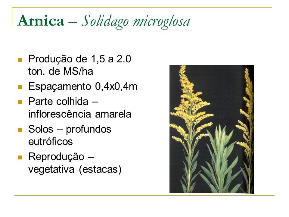Arnica – Solidago microglosa Produção de 1,5 a 2.0 ton. de MS/ha Espaçamento 0,4x0,4m Parte colhida – inflorescência amarela Solos – profundos eutrófi