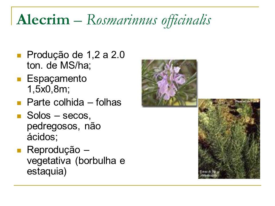 Alecrim – Rosmarinnus officinalis Produção de 1,2 a 2.0 ton. de MS/ha; Espaçamento 1,5x0,8m; Parte colhida – folhas Solos – secos, pedregosos, não áci