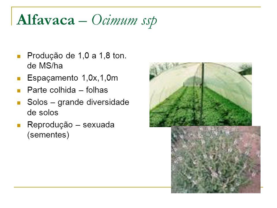 Alfavaca – Ocimum ssp Produção de 1,0 a 1,8 ton. de MS/ha Espaçamento 1,0x,1,0m Parte colhida – folhas Solos – grande diversidade de solos Reprodução