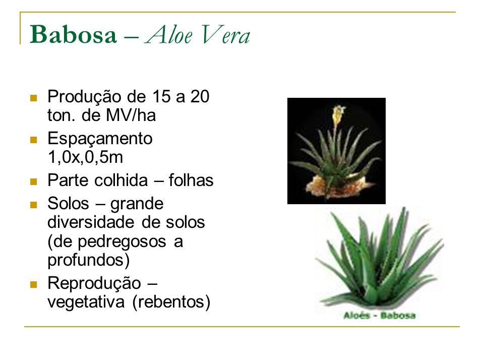 Babosa – Aloe Vera Produção de 15 a 20 ton. de MV/ha Espaçamento 1,0x,0,5m Parte colhida – folhas Solos – grande diversidade de solos (de pedregosos a