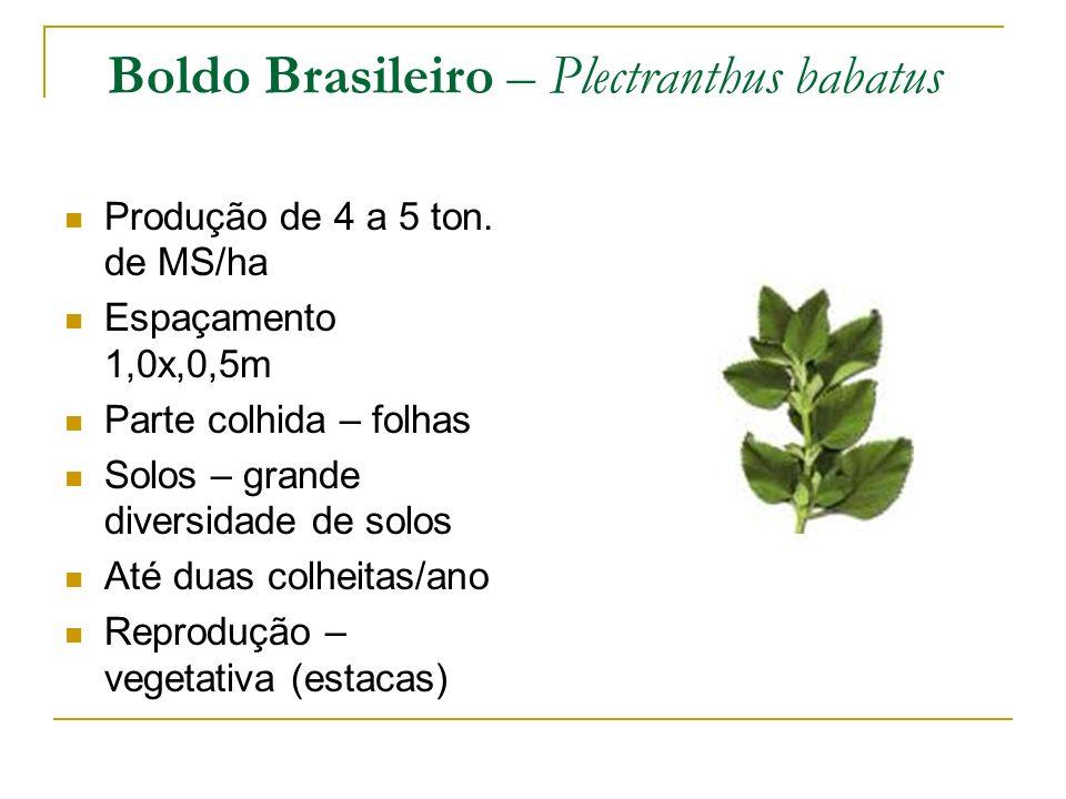 Boldo Brasileiro – Plectranthus babatus Produção de 4 a 5 ton. de MS/ha Espaçamento 1,0x,0,5m Parte colhida – folhas Solos – grande diversidade de sol