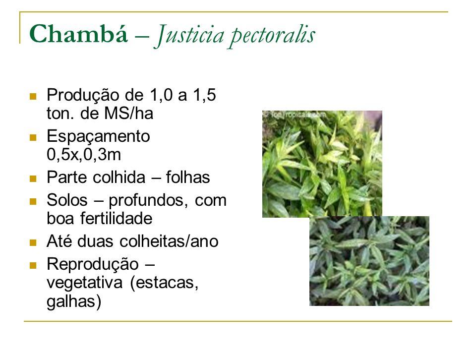 Produção de 1,0 a 1,5 ton. de MS/ha Espaçamento 0,5x,0,3m Parte colhida – folhas Solos – profundos, com boa fertilidade Até duas colheitas/ano Reprodu