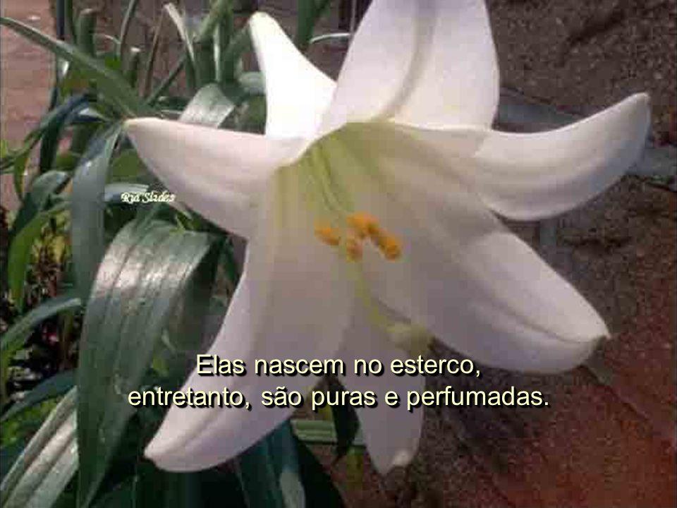 Repare nas flores, continuou o mestre, apontando os lírios que cresciam no jardim. Repare nas flores, continuou o mestre, apontando os lírios que cres