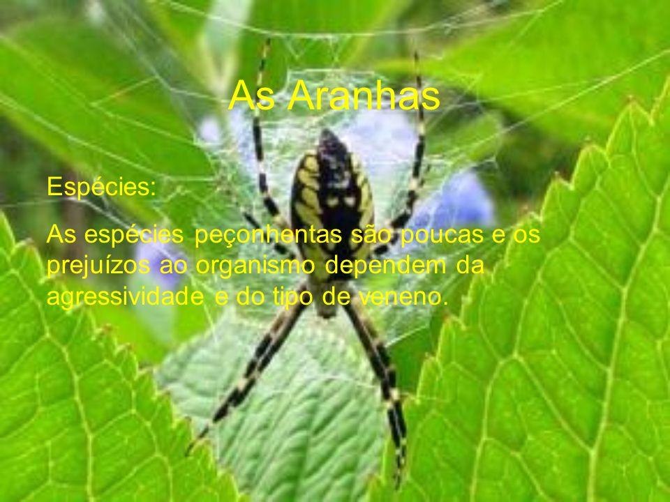 As Aranhas Espécies: As espécies peçonhentas são poucas e os prejuízos ao organismo dependem da agressividade e do tipo de veneno.