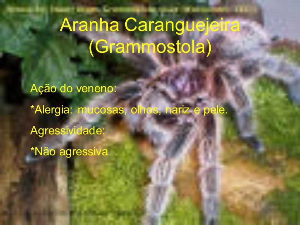 Aranha Caranguejeira (Grammostola) Ação do veneno: *Alergia: mucosas, olhos, nariz e pele. Agressividade: *Não agressiva
