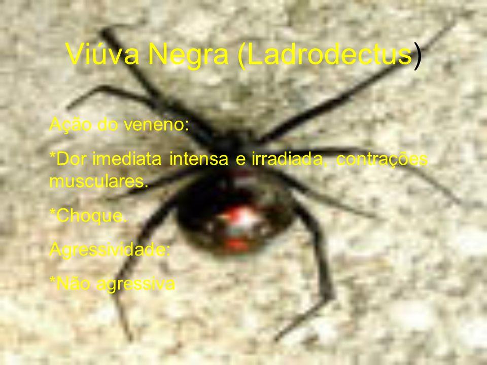 Viúva Negra (Ladrodectus) Ação do veneno: *Dor imediata intensa e irradiada, contrações musculares. *Choque. Agressividade: *Não agressiva