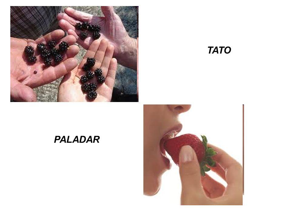 TATO PALADAR