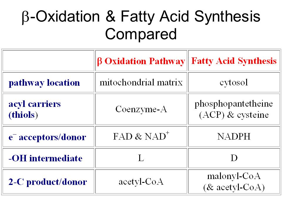 -Oxidation & Fatty Acid Synthesis Compared
