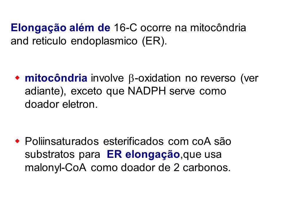 Elongação além de 16-C ocorre na mitocôndria and reticulo endoplasmico (ER). mitocôndria involve -oxidation no reverso (ver adiante), exceto que NADPH