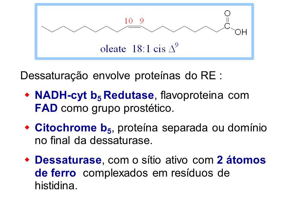 Dessaturação envolve proteínas do RE : NADH-cyt b 5 Redutase, flavoproteina com FAD como grupo prostético. Citochrome b 5, proteína separada ou domíni