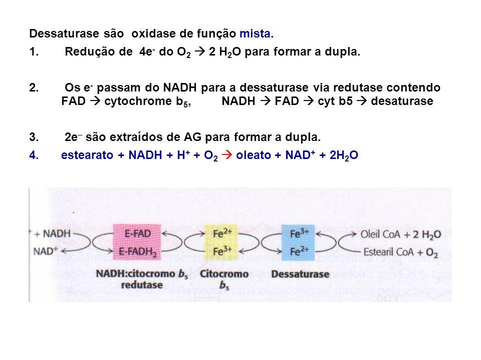 Dessaturase são oxidase de função mista. 1. Redução de 4e - do O 2 2 H 2 O para formar a dupla. 2. Os e - passam do NADH para a dessaturase via reduta