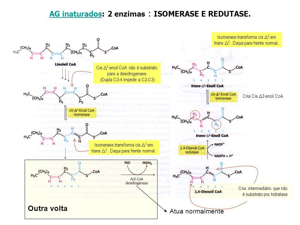 AG inaturadosAG inaturados: 2 enzimas : ISOMERASE E REDUTASE. Cis 3 enoil CoA não é substrato para a desidrogenase. (Dupla C3-4 impede a C2-C3) Isomer