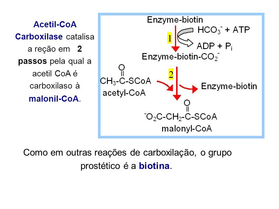 Como em outras reações de carboxilação, o grupo prostético é a biotina. Acetil-CoA Carboxilase catalisa a reção em 2 passos pela qual a acetil CoA é c