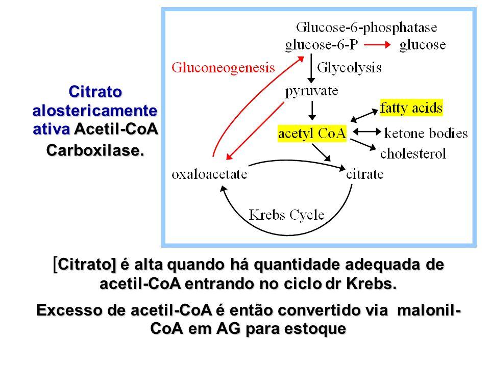Citrato] é alta quando há quantidade adequada de acetil-CoA entrando no ciclo dr Krebs. [ Citrato] é alta quando há quantidade adequada de acetil-CoA