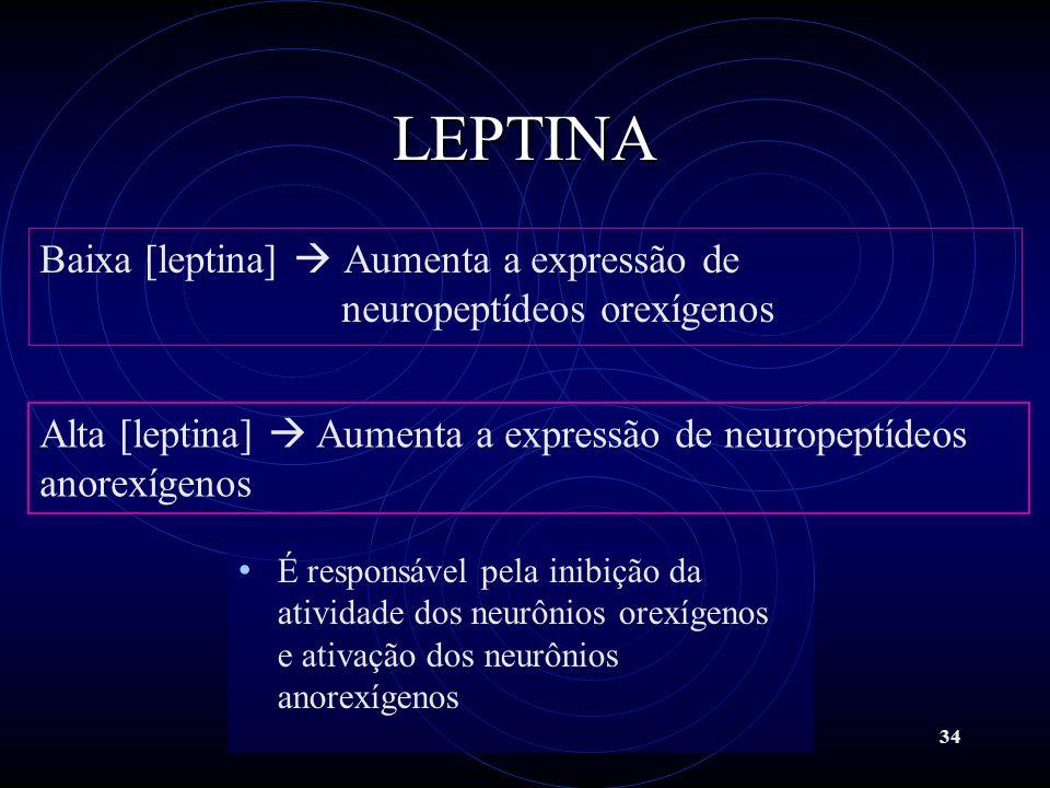34 LEPTINA Baixa [leptina] Aumenta a expressão de neuropeptídeos orexígenos Alta [leptina] Aumenta a expressão de neuropeptídeos anorexígenos É respon