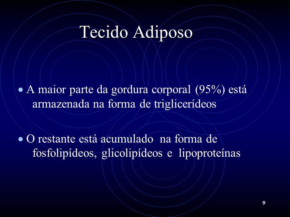 9 Tecido Adiposo A maior parte da gordura corporal (95%) está armazenada na forma de triglicerídeos O restante está acumulado na forma de fosfolipídeo