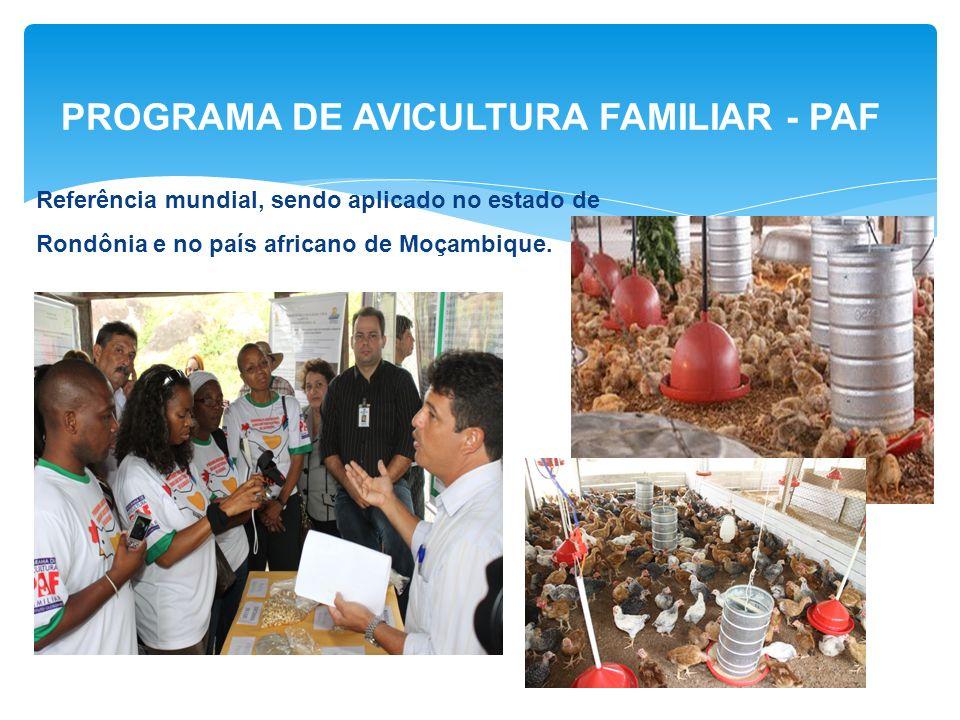 PROGRAMA DE AVICULTURA FAMILIAR - PAF Referência mundial, sendo aplicado no estado de Rondônia e no país africano de Moçambique.