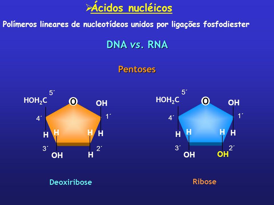 DNA vs. RNA Pentoses O HOH 2 C H H H HH OH Deoxiribose 1´ 5´ 4´ 3´2´ Ribose O HOH 2 C H OH H HH 1´ 5´ 4´ 3´2´ Ácidos nucléicos Polímeros lineares de n