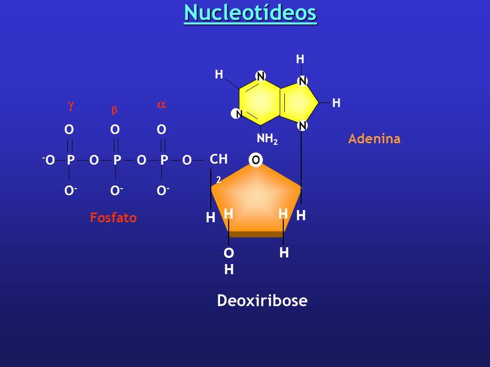 Nucleotídeos O CH 2 H H H HH OHOH Deoxiribose OPPOOP -O-O OOO O-O- Fosfato O-O- O-O- Adenina NH 2 N H N H N N H