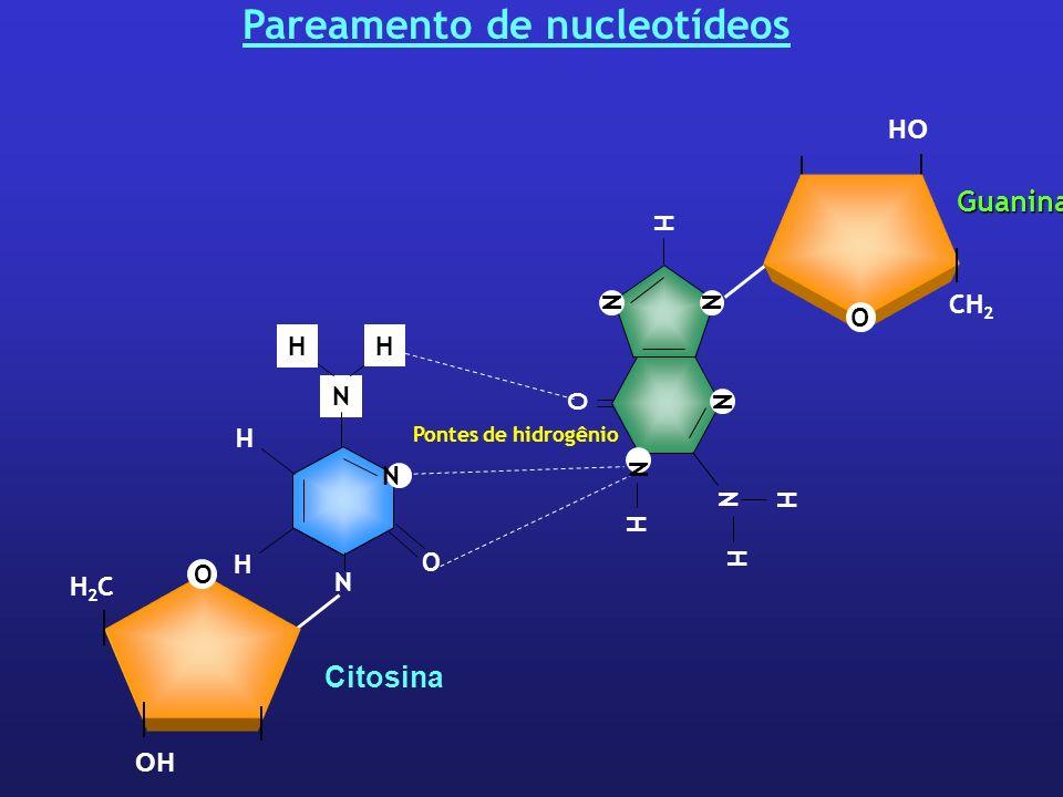 Pareamento de nucleotídeos Pontes de hidrogênio CH 2 O OH Guanina O N N N H NN H H H O H2CH2C Citosina H H N O N N H H