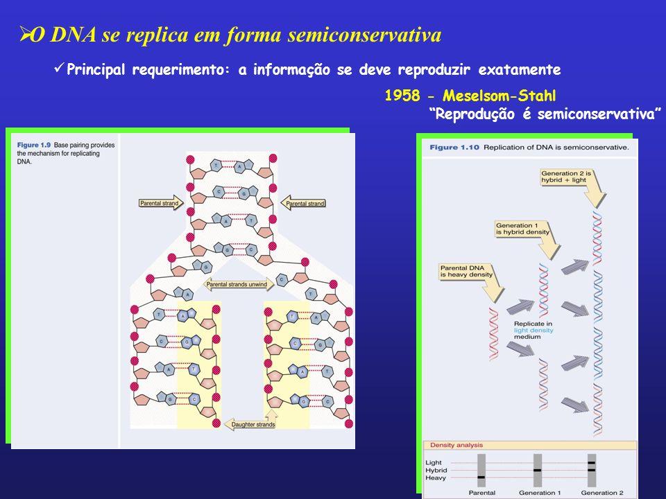 O DNA se replica em forma semiconservativa Principal requerimento: a informação se deve reproduzir exatamente 1958 - Meselsom-Stahl Reprodução é semic