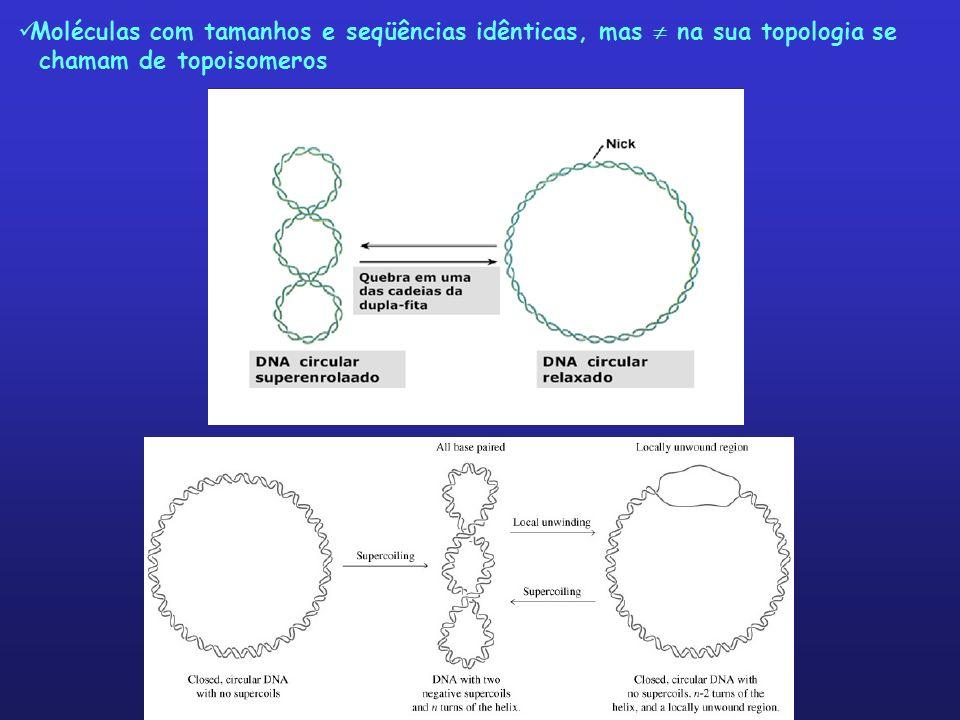Moléculas com tamanhos e seqüências idênticas, mas na sua topologia se chamam de topoisomeros