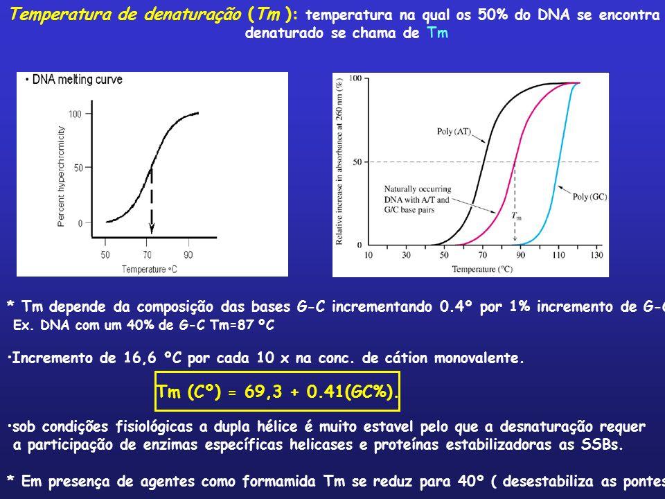 Temperatura de denaturação (Tm ): temperatura na qual os 50% do DNA se encontra denaturado se chama de Tm * Tm depende da composição das bases G-C inc