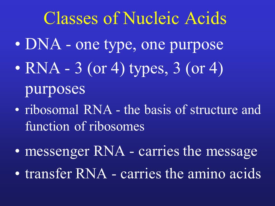 Classes of Nucleic Acids DNA - one type, one purpose RNA - 3 (or 4) types, 3 (or 4) purposes ribosomal RNA - the basis of structure and function of ri