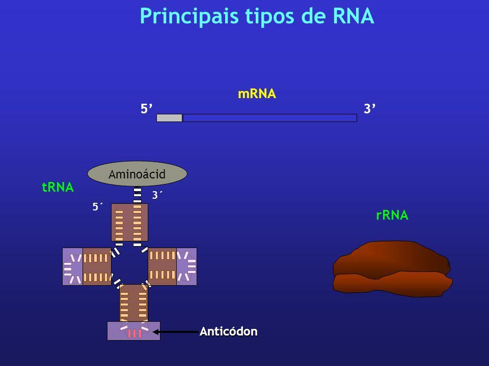 3 mRNA 5 rRNA Principais tipos de RNA Aminoácid o 5´ 3´ tRNA Anticódon