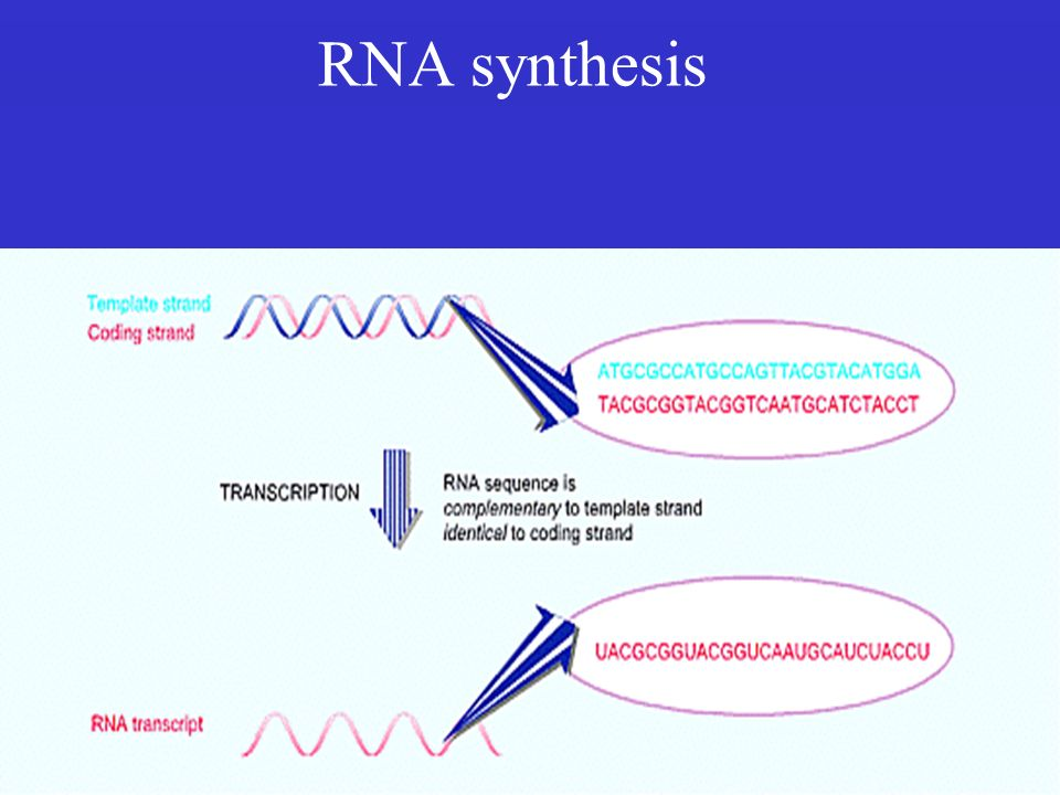 RNA synthesis