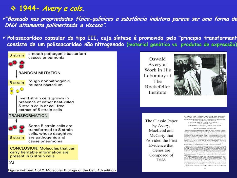 1944- Avery e cols. Baseado nas propriedades físico-químicas a substância indutora parece ser uma forma de DNA altamente polimerizada e viscosa. Polis