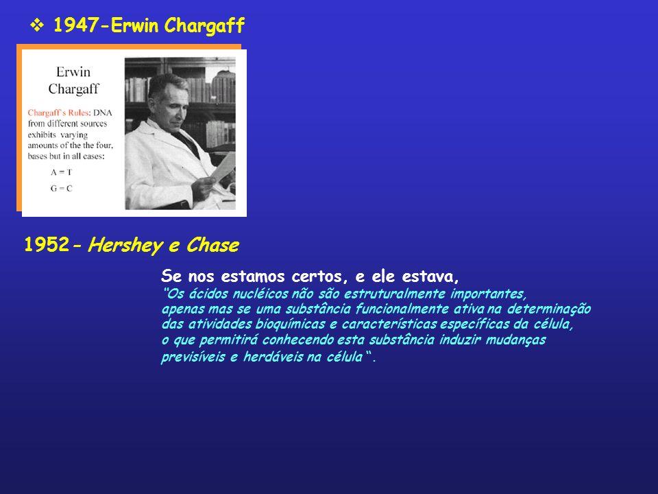 1947-Erwin Chargaff 1952- Hershey e Chase Se nos estamos certos, e ele estava, Os ácidos nucléicos não são estruturalmente importantes, apenas mas se