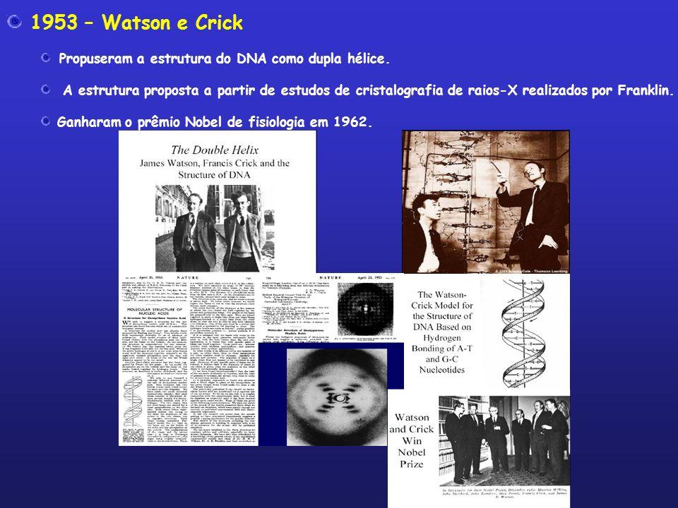 1953 – Watson e Crick Propuseram a estrutura do DNA como dupla hélice. A estrutura proposta a partir de estudos de cristalografia de raios-X realizado