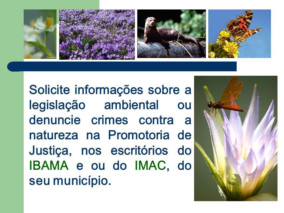 Solicite informações sobre a legislação ambiental ou denuncie crimes contra a natureza na Promotoria de Justiça, nos escritórios do IBAMA e ou do IMAC