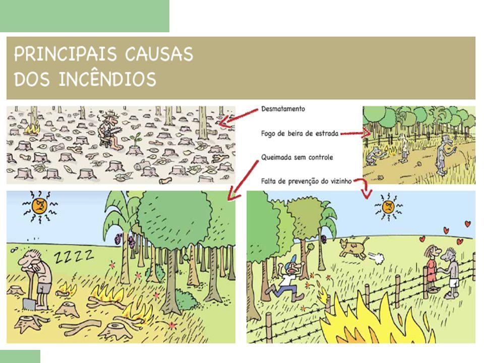 cada hectare de mata consumido pelo fogo lança na atmosfera cerca de 115 toneladas de carbono, isto quer dizer que o peso das árvores é dissolvido e diluído no ar.