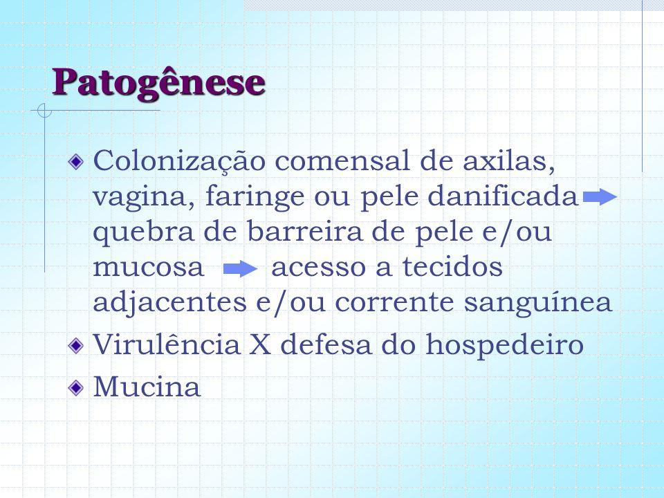 Patogênese Colonização comensal de axilas, vagina, faringe ou pele danificada quebra de barreira de pele e/ou mucosa acesso a tecidos adjacentes e/ou