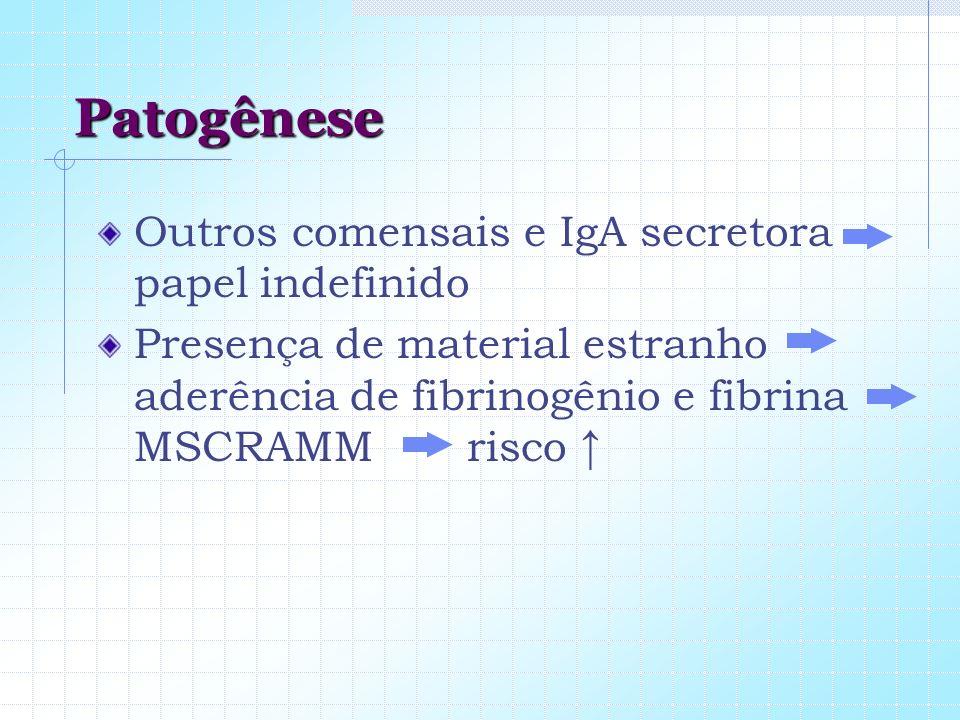 Patogênese Outros comensais e IgA secretora papel indefinido Presença de material estranho aderência de fibrinogênio e fibrina MSCRAMM risco