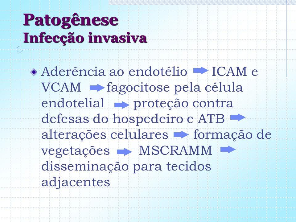 Patogênese Infecção invasiva Aderência ao endotélio ICAM e VCAM fagocitose pela célula endotelial proteção contra defesas do hospedeiro e ATB alteraçõ