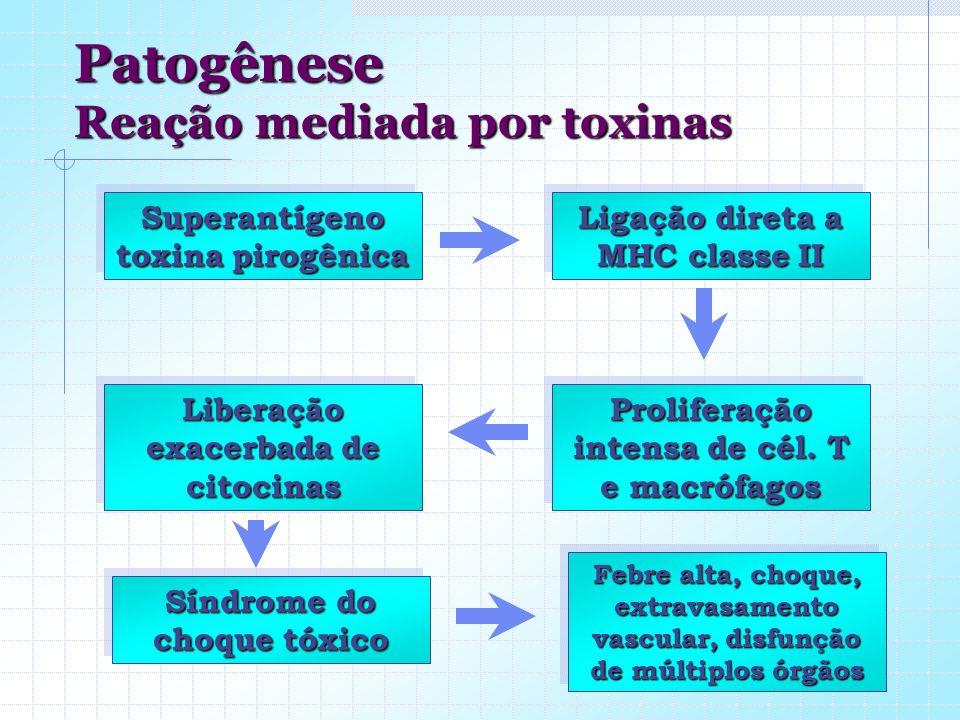 Patogênese Reação mediada por toxinas Superantígeno toxina pirogênica Ligação direta a MHC classe II Proliferação intensa de cél. T e macrófagos Liber