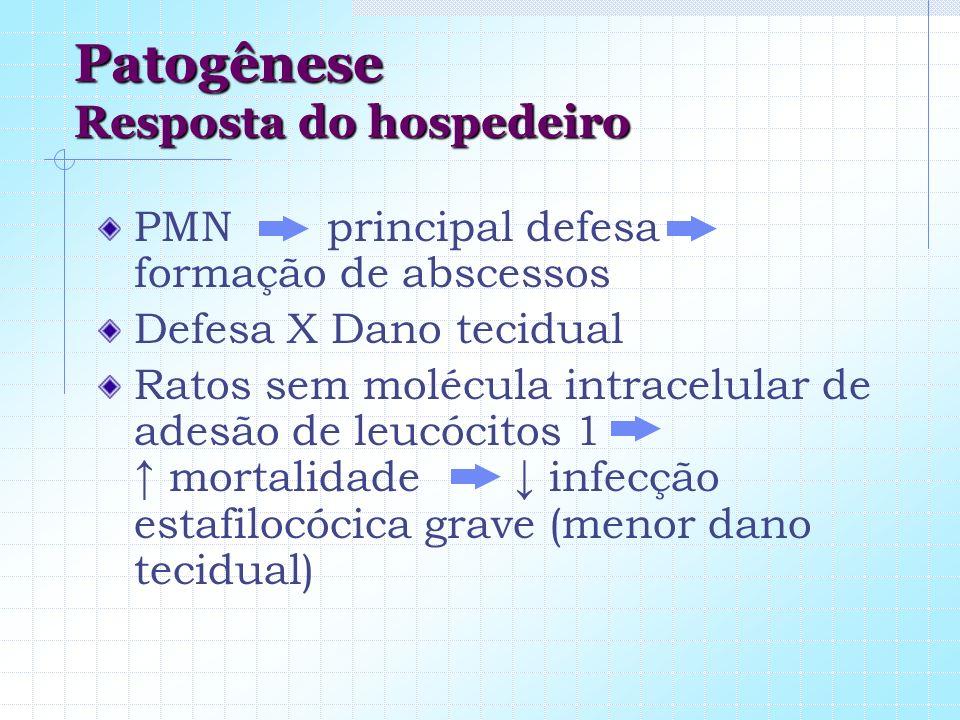 Patogênese Resposta do hospedeiro PMN principal defesa formação de abscessos Defesa X Dano tecidual Ratos sem molécula intracelular de adesão de leucó
