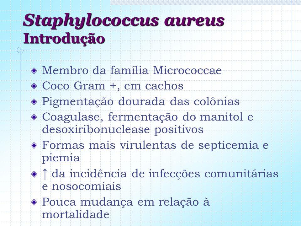 Staphylococcus aureus Introdução Membro da família Micrococcae Coco Gram +, em cachos Pigmentação dourada das colônias Coagulase, fermentação do manit