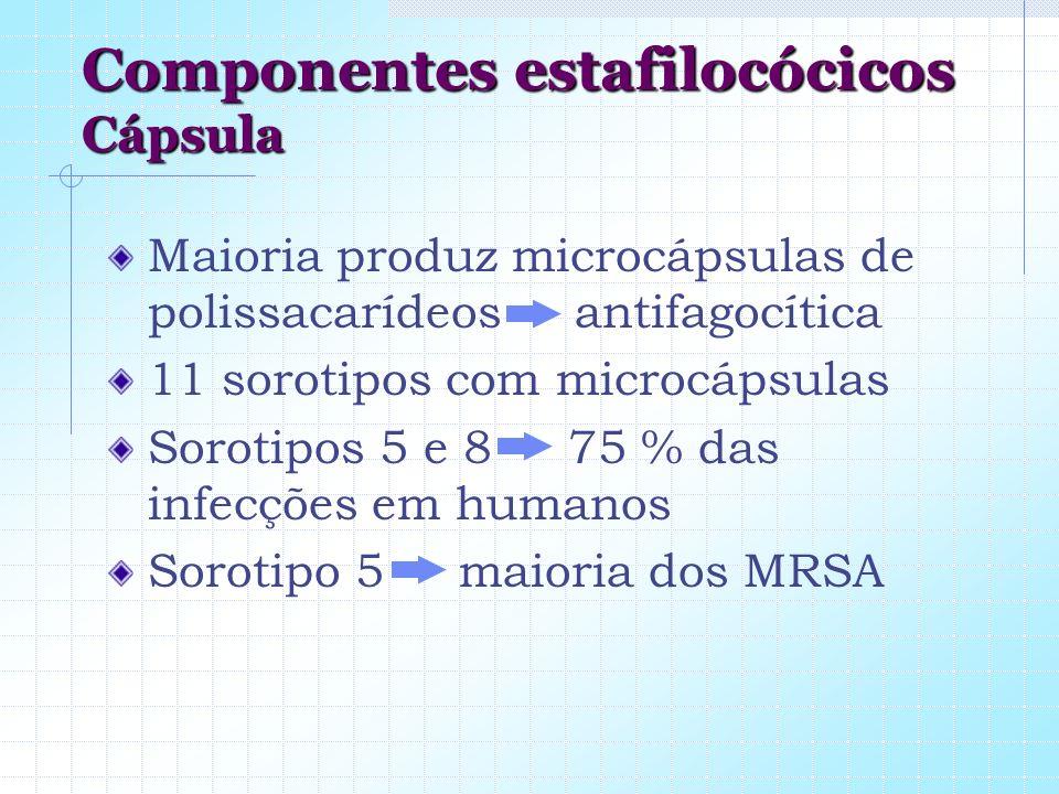 Componentes estafilocócicos Cápsula Maioria produz microcápsulas de polissacarídeos antifagocítica 11 sorotipos com microcápsulas Sorotipos 5 e 8 75 %