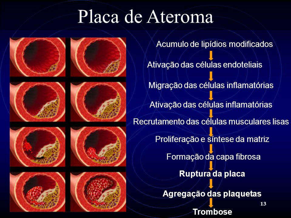 13 Placa de Ateroma Acumulo de lipídios modificados Ativação das células endoteliais Migração das células inflamatórias Ativação das células inflamató