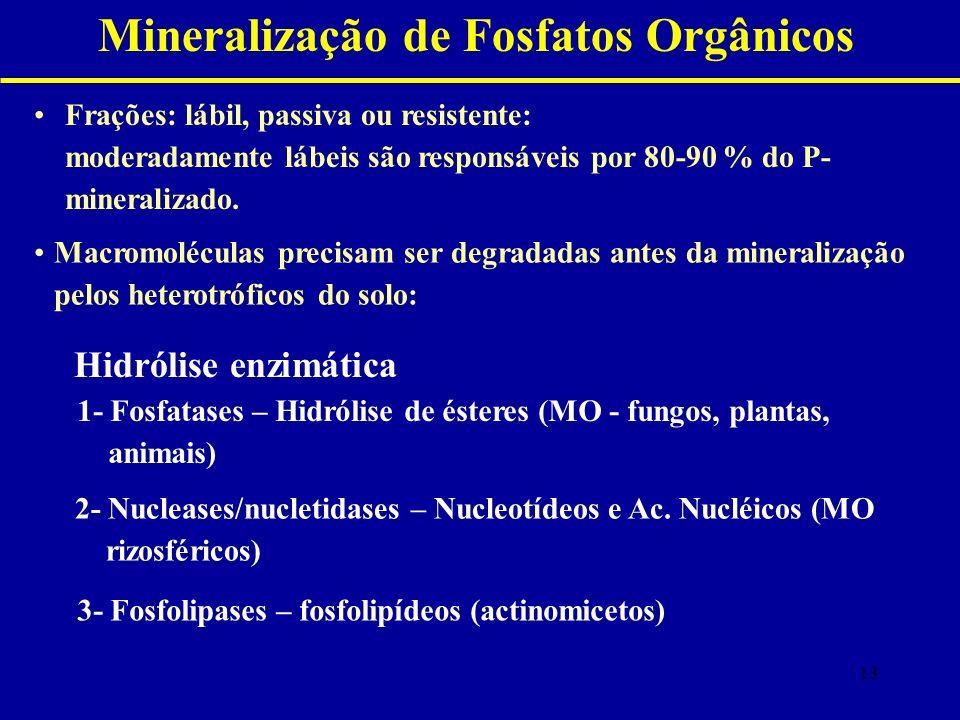 Mineralização de Fosfatos Orgânicos Frações: lábil, passiva ou resistente: moderadamente lábeis são responsáveis por 80-90 % do P- mineralizado.