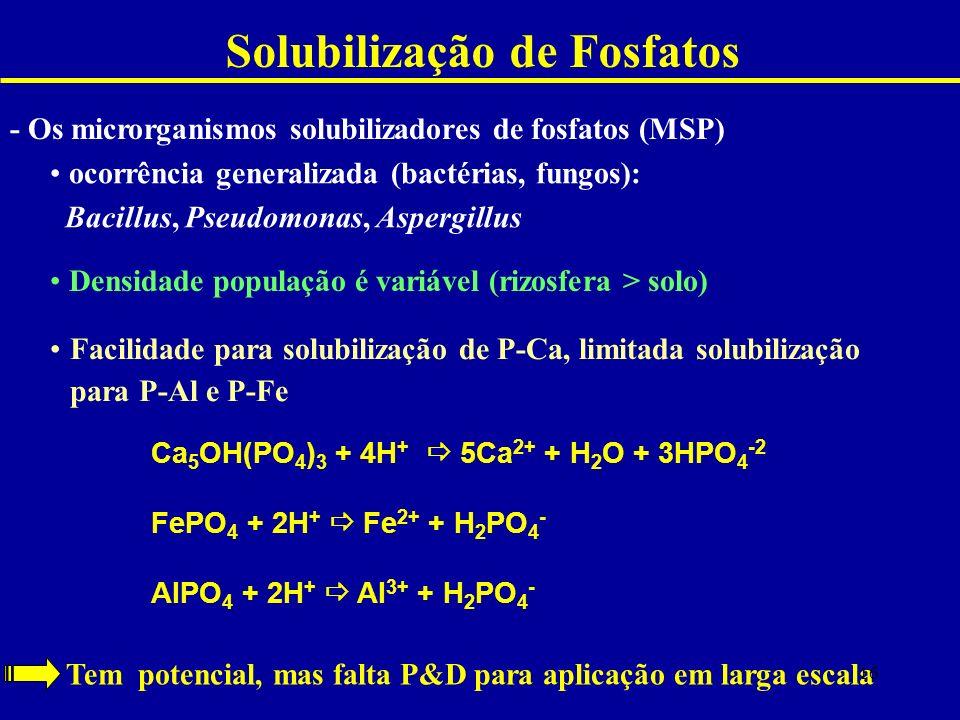 Solubilização de Fosfatos - Os microrganismos solubilizadores de fosfatos (MSP) ocorrência generalizada (bactérias, fungos): Bacillus, Pseudomonas, Aspergillus Densidade população é variável (rizosfera > solo) Facilidade para solubilização de P-Ca, limitada solubilização para P-Al e P-Fe Tem potencial, mas falta P&D para aplicação em larga escala Ca 5 OH(PO 4 ) 3 + 4H + 5Ca 2+ + H 2 O + 3HPO 4 -2 FePO 4 + 2H + Fe 2+ + H 2 PO 4 - AlPO 4 + 2H + Al 3+ + H 2 PO 4 - 16