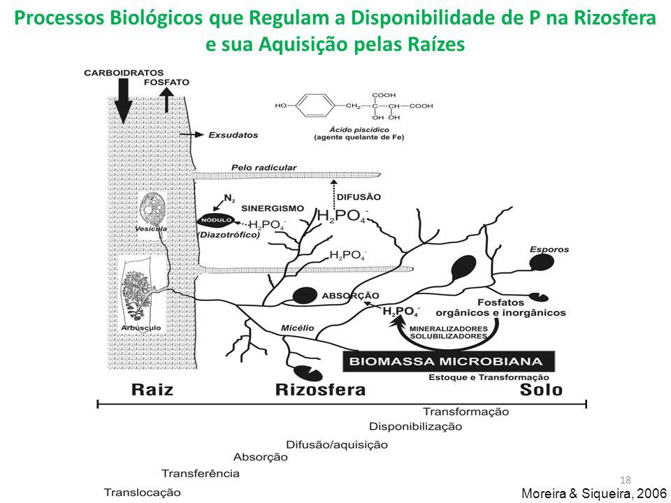 Processos Biológicos que Regulam a Disponibilidade de P na Rizosfera e sua Aquisição pelas Raízes Moreira & Siqueira, 2006 18